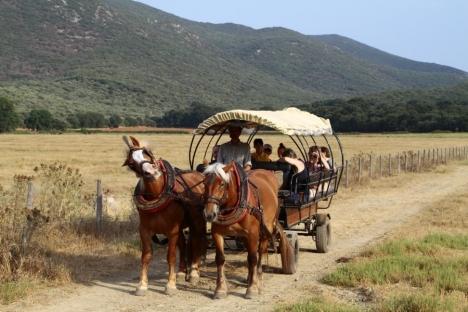 In carrozza nel Parco Naturale della Maremma