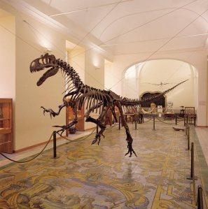 Museo di Paleontologia, Napoli