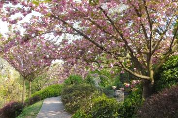 fioritura giardino giapponese